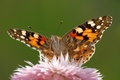 Picture flower, butterfly, wings, petals, moth