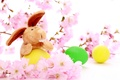 Picture Easter, rabbit, colored eggs, cherry flowers, holiday