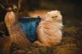 Picture cat, broom, fluffy, bucket, street