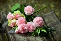 Picture clove, background, roses, bouquet