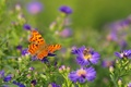 Picture flowers, wings, field, insect, meadow, butterfly, bee