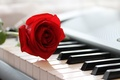 Picture music, piano, rose