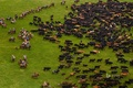 Picture the herd, Ecuador, pasture, grass, Andes, cows