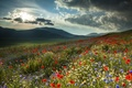 Picture flowers, field, mountains, nature