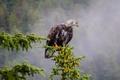 Picture tree, bumps, bird, eagle