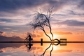 Picture tree, bike, reflection, woman, silhouettes, sunset