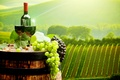 Picture landscape, wine, field, bottle, glasses, grapes, tube, barrel, plantation