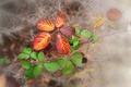 Picture macro, twigs, autumn, nature, leaves