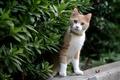 Picture animal, curiosity, Kitty