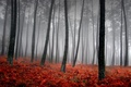 Picture fog, trees, grass, red
