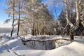 Picture trees, snow, forest, winter
