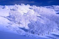 Picture the sky, slope, snow, winter, hills, trees
