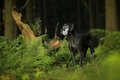 Picture dog, look, forest, each