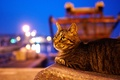 Picture cat, animals, look, Wallpaper from lolita777, the city, lights, the evening, twilight, cat