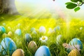 Picture forest, grass, the sun, light, flowers, chamomile, eggs, spring, meadow, Easter, grass, sunshine, forest, flowers, ...