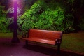 Picture light, trees, the evening, lantern, the bushes, bench