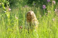 Picture girl, summer, field