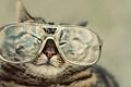 Picture cat, glasses, spout, squints