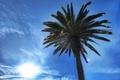 Picture beauty, blue, Santa Monica, Los Angeles, the sun, the sky, Palma, clouds