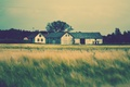 Picture roof, greens, grass, trees, landscape, nature, house, background, tree, home, blur, apartment, HDw allpapers