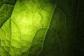 Picture macro, light, sheet, green, veins