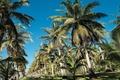 Picture sea, Palm trees, Thailand, Cote d'azur