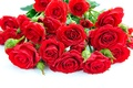 Picture flowers, white background, petals, bouquet, red, roses, drops
