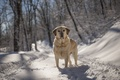 Picture dog, look, winter, each