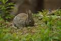 Picture rabbit, grass, grey