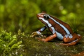 Picture frog, dampness, nature