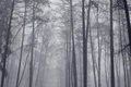 Picture fog, trees, forest