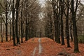 Picture forest, trees, leaves, autumn, leaves, trees, autumn, forest