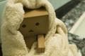 Picture box, head, cardboard, danbo