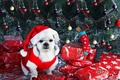 Picture dog, look, holiday, each