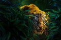 Picture King, Boy, Young man, Apes, Baloom, Kaa, The, The Jungle Book, Shere Khan, Avaza, Tiger, ...