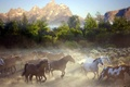 Picture mountains, nature, horses, dust, morning