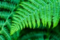 Picture green, nature, leaves, plants