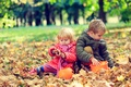 Picture friends, autumn, friends, play, Autumn, leaves, girl, play, leaves, Boys, Little, children, boy, children, girl