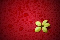 Picture red background, yellow, flower, drops