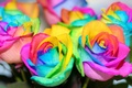 Picture flowers, rainbow, flowers, colorful, roses, roses, colorful, rainbow