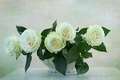 Picture FLOWER, WHITE, ROSES, NATURE, FLOWERS