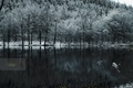 Picture snow, lake, cold, forest