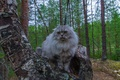 Picture cat, meow, kitty, surprise, fluffy, birch, NASA, grey wool, eyes, cat