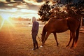Picture Nature, Trees, Horses, Sunrise