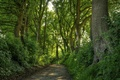 Picture road, forest, leaves, trees, trunk, crown
