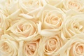 Picture flowers, background, plants, pastel, roses, pastel