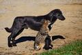 Picture friendship, friends, cat, dog, cat