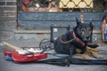 Picture dog, guitar, street