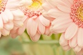 Picture flower, flowers, nature, pink, tenderness, petals, garden, petal, flowers, flowerbed, flowering, widescreen Wallpaper, the Wallpapers, ...