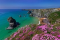 Picture sea, flowers, rocks, coast, England, England, Cornwall, Cornwall, Bedruthan Steps, Celtic sea, Celtic Sea, seaside ...
